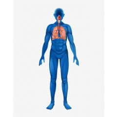 DMGT005b - Overview of the Respiratory System