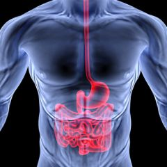 DMGT005c - Overview of the Digestive System