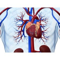 AGE010 - Aging and Cardiovascular Disease