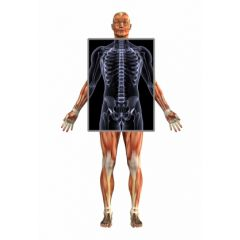 DMGT005d - Overview of the Musculoskeletal System